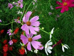 colorful garden flowers photo.jpg
