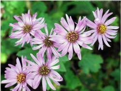 light garden flowers asters.jpg