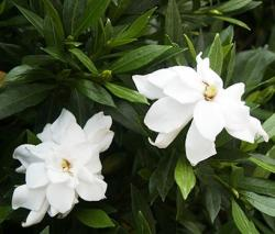 picture of garden flowers.jpg