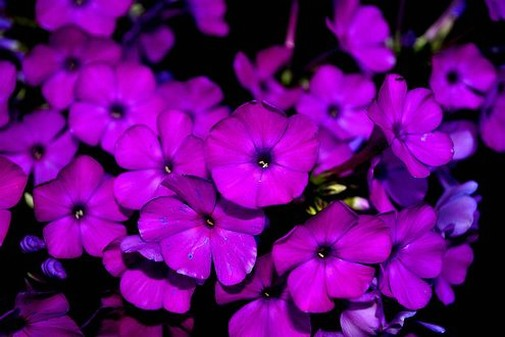 Purple Flowers Pictures 166 Posted