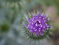 beautiful purple flower pictures.jpg