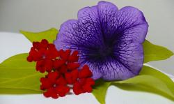 big dark purple flower photo.jpg