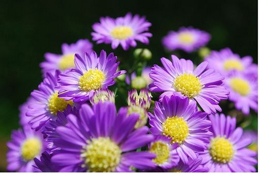 Flowers And Purple With Yellow Centers Jpg
