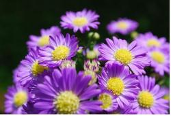 flowers and purple with yellow centers.jpg