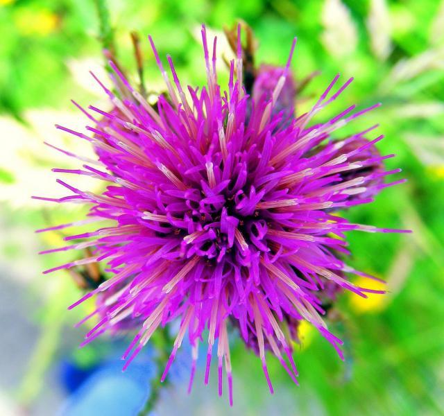 Fuzzy purple flowersg hi res 720p hd fuzzy purple flowersg mightylinksfo