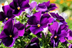 Image of Dark purple flowers.jpg