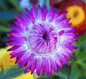 purple flower photo, Beautiful flower