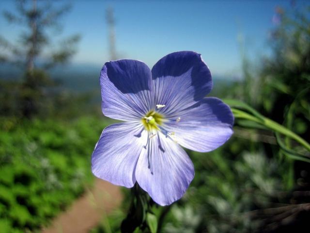 Light Blueish Purple Flowers