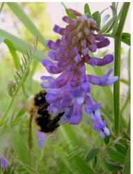 purple and lavender flowers with a bee.jpg