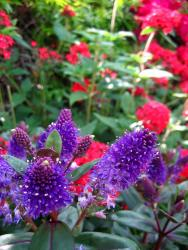 purple and red flowers.jpg