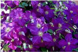 purple flowers bouquet.jpg