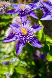 purple yellow flowers photo.jpg