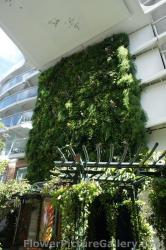 Multi-story Living Wall of Green Plants aboard Oasis of the Seas Cruise Ship.jpg