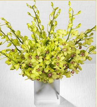 Image of Yellowish green Peridot Orchid flowers for wedding centerpiece.JPG