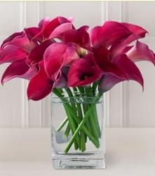 Pink Pirouette Mini Calla in bright and beautiful pink photo.JPG