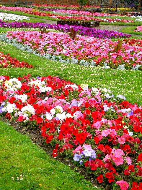 Types of garden flowers jpg 1 comment hi res 720p hd for Flowers and gardens pictures