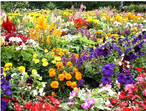 Bright colorful flowers at Flower garden at Lorne Park.JPG