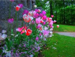 Colorful Flowers in the Castle garden.JPG