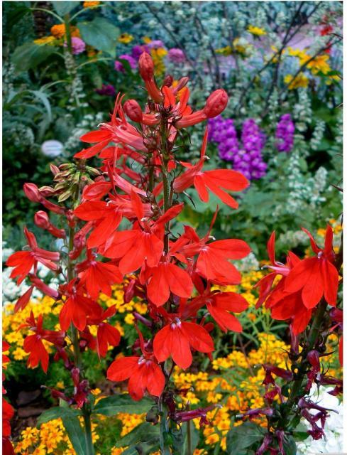 colorful tropical garden flowers jpg  1 comment  hi