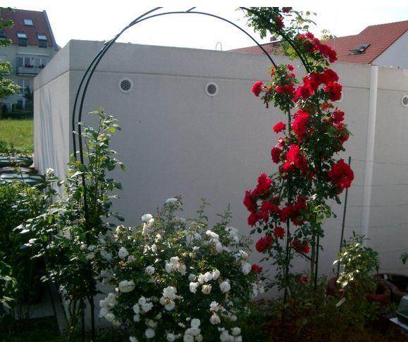 garden flowersJPG