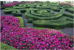 Flower garden at Epcot Centre in Walt Disney World.JPG