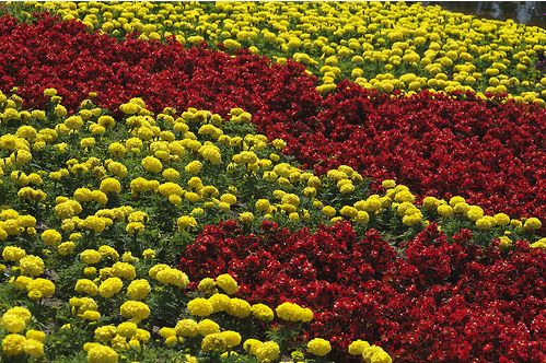 flower garden flowers in red and yellowJPG