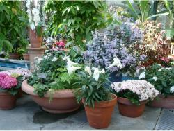 Flowers in planters at US Botanic Garden.JPG