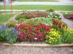 flowers to plant in garden.JPG