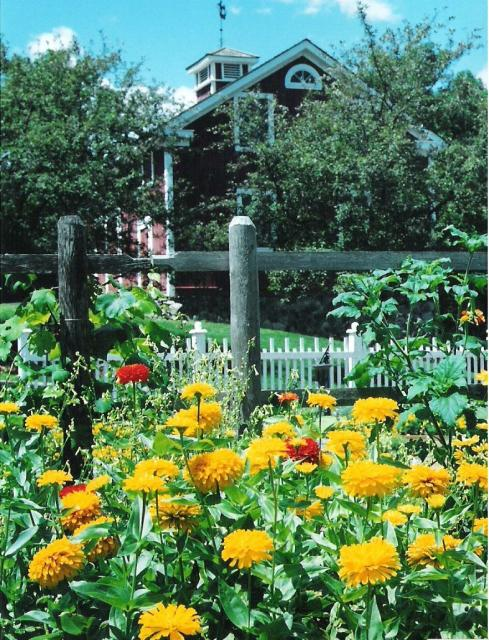 Live Flower Garden : Garden of live flowers in yellow and red g hi res p hd