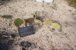 Plains Prickly Pear Cactus.jpg