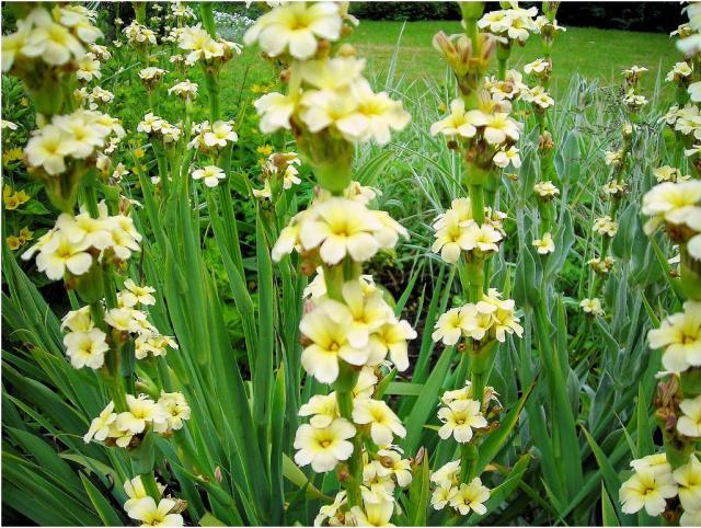 Gardens flowers with light yellow flowersg hi res 720p hd gardens flowers with light yellow flowersg mightylinksfo