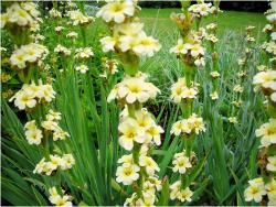 gardens flowers with light yellow flowers.JPG