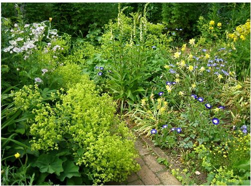 Hidcote Manor Garden with greens and blue flowers.JPG