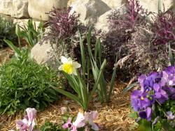 homemade garden flowers bed picture.JPG
