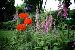 image of red and purple flowers in garden.JPG