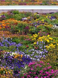 Indian garden flowers with full of bright colorful flowers.JPG