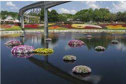 photos of Flower garden at Epcot Centre in Walt Disney World.JPG