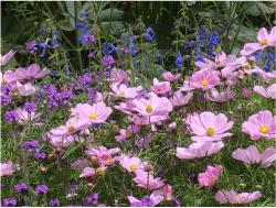 purple flower garden.JPG
