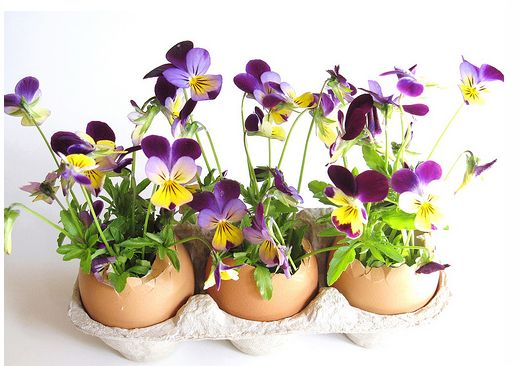 Egg shells arrangement with purple and yellow flowers picture.JPG