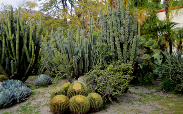 Chic Cactus Garden With Different Sizes PlantsPNG