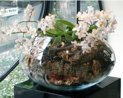 glass round arrangement with small white flowers photos.JPG