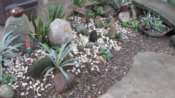 Cool cactus garden with small and big size cactus.PNG