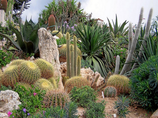 desert garden with different flowers photos png hi res 720p hd