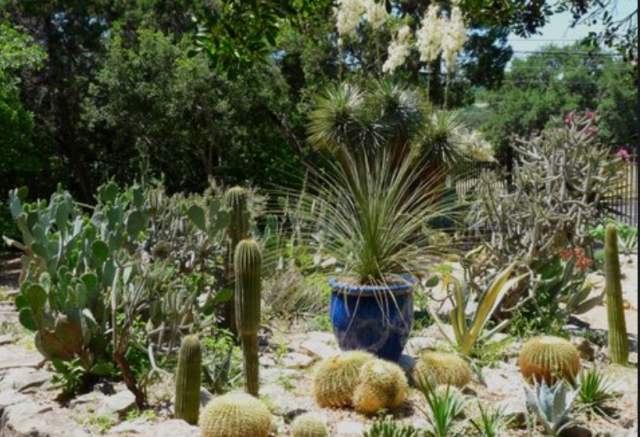 Fancy cactus garden photos.PNG