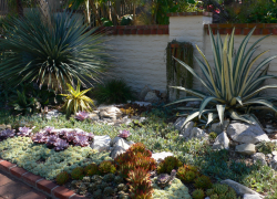 Pictures of cactus garden ideas.PNG