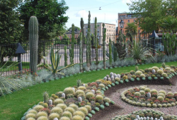 Public cactus garden with full round cactus and other kinds.PNG
