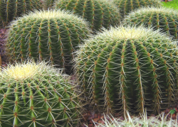 Cacti plants photos.PNG
