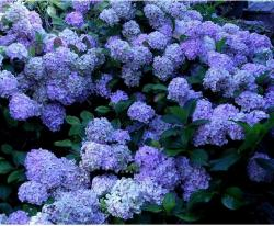 flower arrangements hydrangeas.JPG